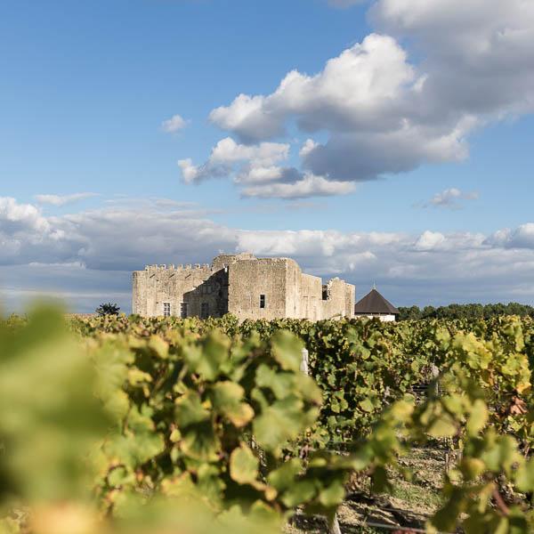 Photographie du Château de Fargues au milieu des vignes.