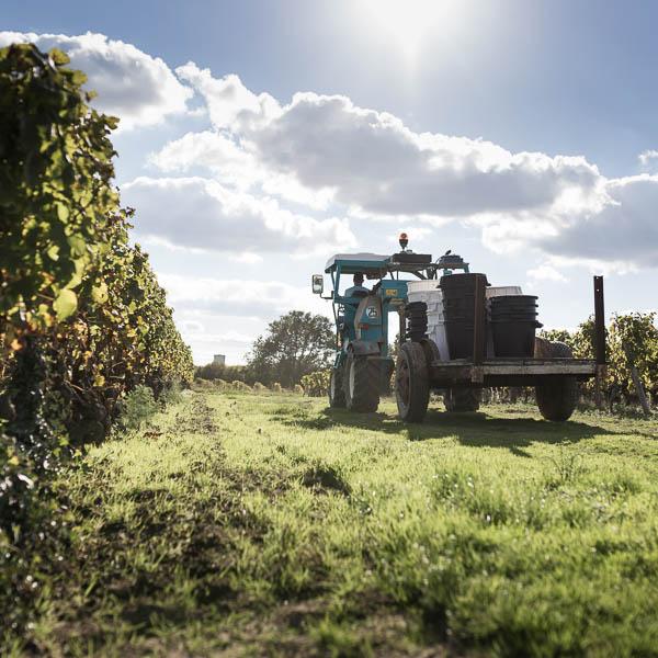 Reportage d'entreprise dans les vignes du Château de Fargues